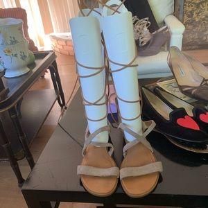 Seychelles Tall Gladiator Sandals